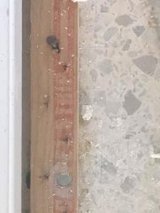 Tack strip terrazzo floor